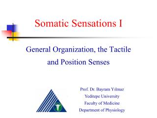 Somatic Sensations I General Organization, the Tactile and Position Senses