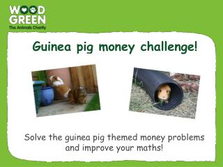Guinea pig money challenge!