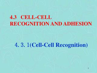 4.3   CELL-CELL  RECOGNITION AND ADHESION