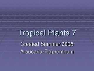Tropical Plants 7