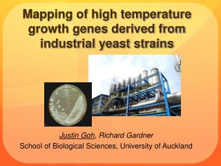 Mapping of high temperature growth genes derived from industrial yeast strains