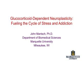 Glucocorticoid-Dependent Neuroplasticity: Fueling the Cycle of Stress and Addiction