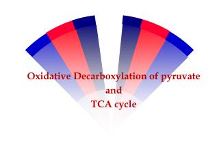 Oxidative Decarboxylation of pyruvate  and  TCA cycle
