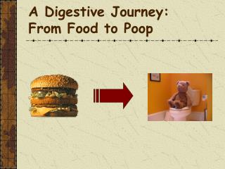 A Digestive Journey: From Food to Poop