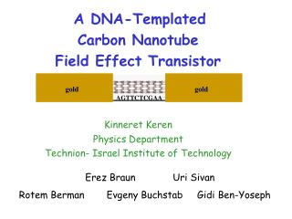 A DNA-Templated  Carbon Nanotube  Field Effect Transistor