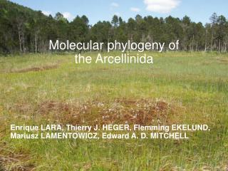 Molecular phylogeny of  the Arcellinida