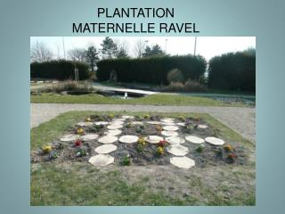 PLANTATION MATERNELLE RAVEL