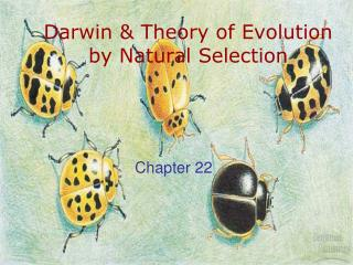 Darwin & Theory of Evolution by Natural Selection
