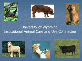 University of Wyoming  Institutional Animal Care and Use Committee