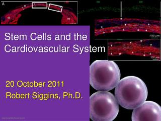 Stem Cells and the Cardiovascular System