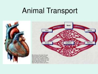Animal Transport