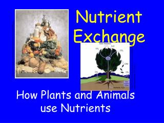 Nutrient Exchange