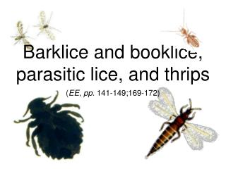 Barklice and booklice, parasitic lice, and thrips