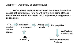 Chapter 11 Assembly of Biomolecules We've looked at the construction of monomers for the four
