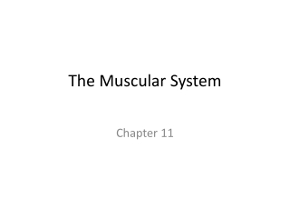 Chapter 10-11:   The Muscles and Muscle Tissue