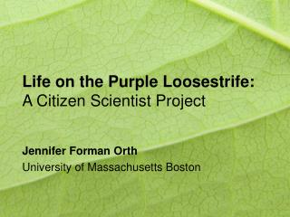 Life on the Purple Loosestrife: A Citizen Scientist Project