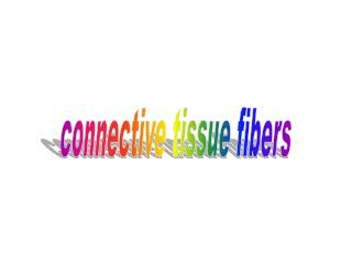 connective tissue fibers