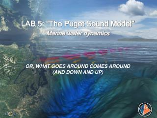 "LAB 5: ""The Puget Sound Model"" Marine water dynamics"