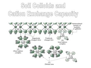 Soil Colloids and Cation Exchange Capacity