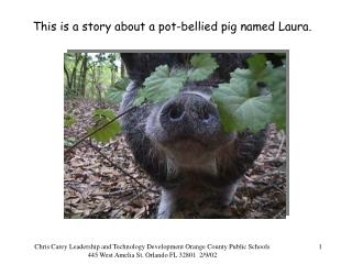 This is a story about a pot-bellied pig named Laura.