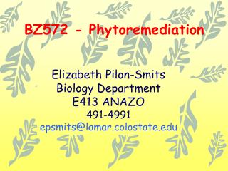 BZ572 - Phytoremediation