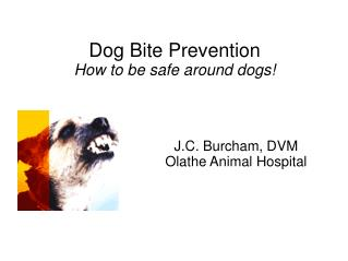 Dog Bite Prevention How to be safe around dogs!