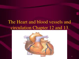 The Heart and blood vessels and circulation Chapter 12 and 13