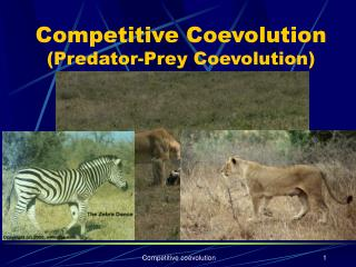 Competitive Coevolution (Predator-Prey Coevolution)