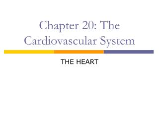 Chapter 20: The Cardiovascular System