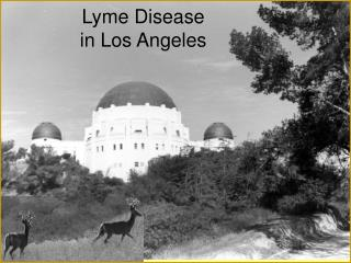 Lyme Disease  in Los Angeles