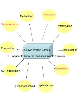 Unknown Protein Sample Q:  I wonder to know the modification of this protein.