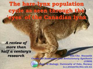 The hare-lynx population cycle as seen through the 'eyes' of the Canadian lynx