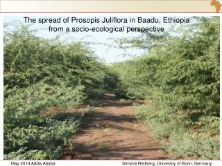 The spread of Prosopis Juliflora in Baadu, Ethiopia  from a socio-ecological perspective