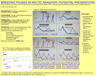 ASSUMPTION : A breeding pause (BP) is common in Arctic  Rangifer 1