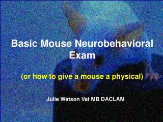 Basic Mouse Neurobehavioral Exam (or how to give a mouse a physical)