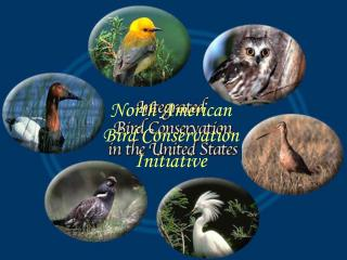 North American Bird Conservation Initiative