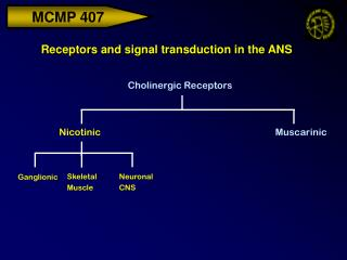 Receptors and signal transduction in the ANS