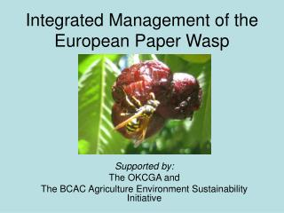 Integrated Management of the European Paper Wasp