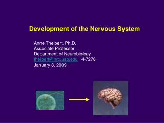 Development of the Nervous System