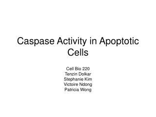 Caspase Activity in Apoptotic Cells