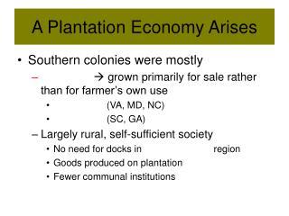 A Plantation Economy Arises