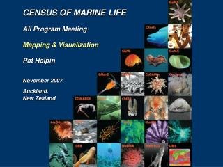 CENSUS OF MARINE LIFE All Program Meeting Mapping & Visualization Pat Halpin November 2007