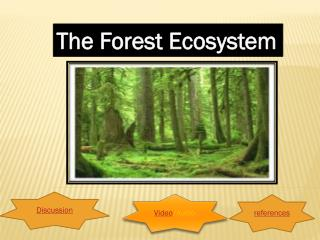 The Forest Ecosystem