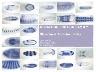 HEDGEHOG PROTEIN FAMILY Structural Bioinformatics Oriol Senan Alexandros Pittis Amadís Pagès