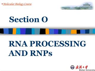 RNA PROCESSING AND RNPs