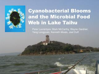 Cyanobacterial Blooms and the Microbial Food Web in Lake Taihu