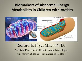 Biomarkers  of Abnormal  Energy  Metabolism in Children with  Autism