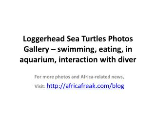 Photos of Loggerhead sea turtle to download for free