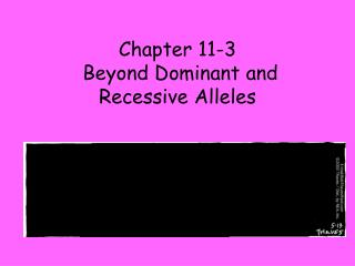 Chapter 11-3  Beyond Dominant and Recessive Alleles