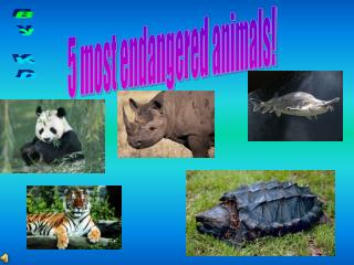 5 most endangered animals!